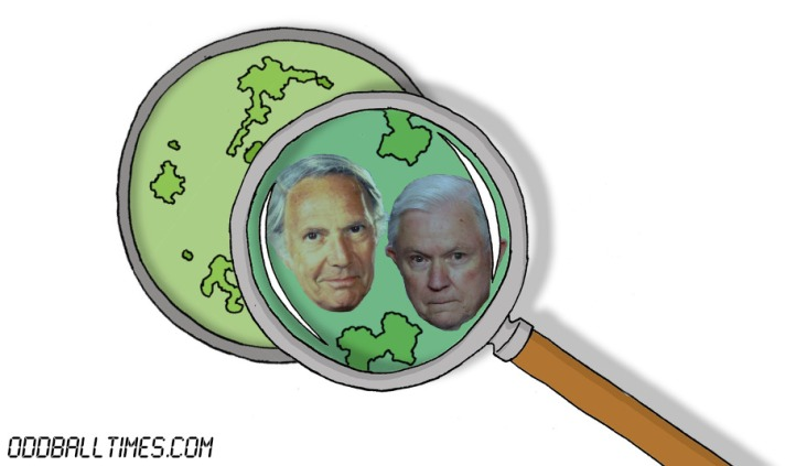 A cartoon of a petri dish with Jeff Sessions and Mason Adams inside. By Oddball Times