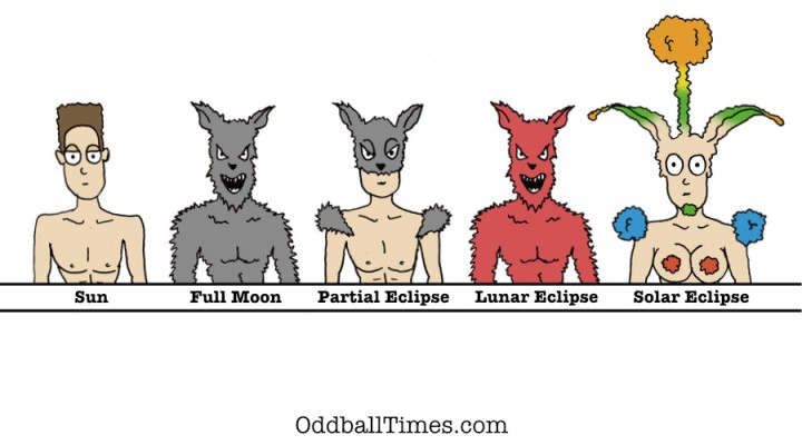 An illustration of different werewolf phases to show what happens to them during an eclipse. By Oddball Times