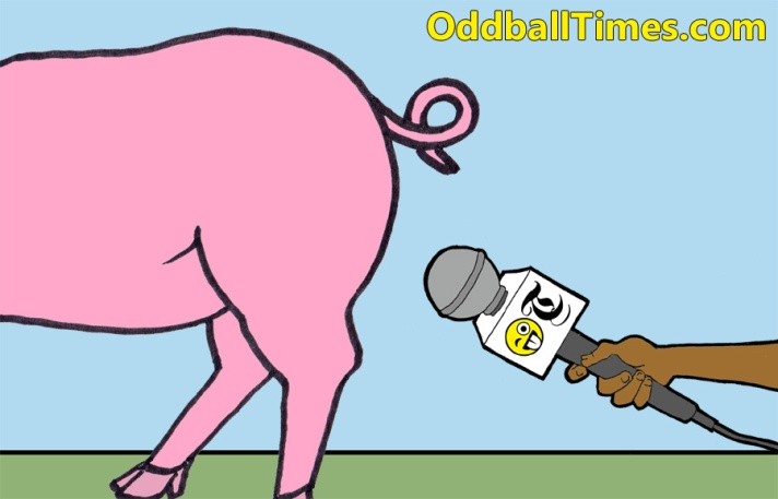 A cartoon image of a pig with the gammon section being interviewed by a reporter. By Oddball Times