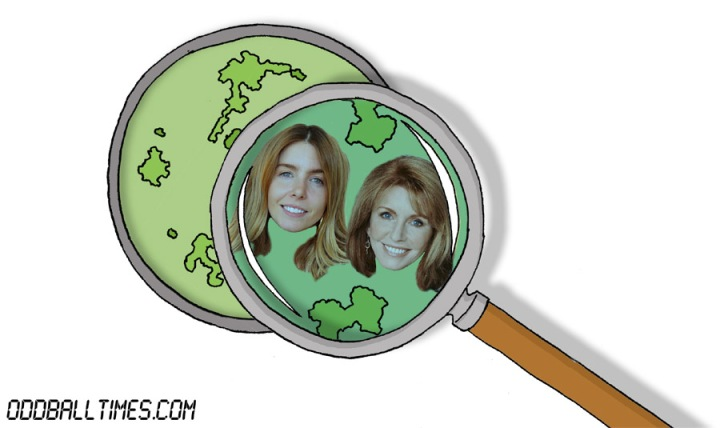 A cartoon of a Petri dish with Stacey Dooley and Jane Asher inside. By Oddball Times