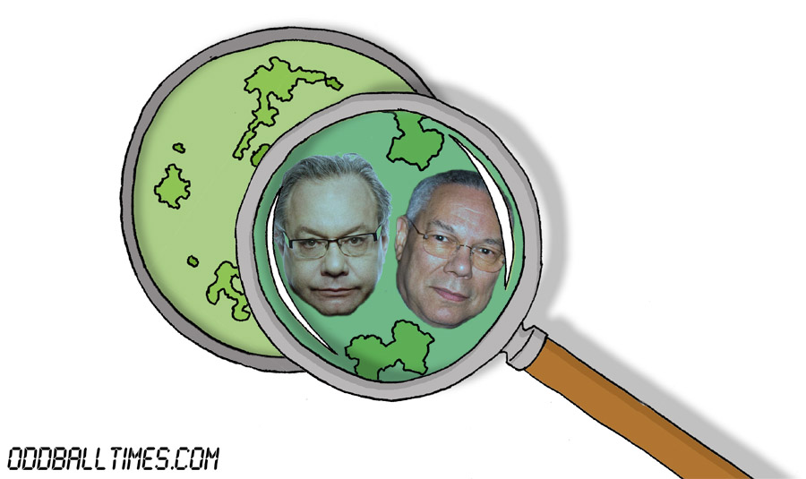 A cartoon of a Petri dish with Colin Powell and Lewis Black inside. By Oddball Times