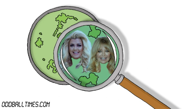 A cartoon of a Petri dish with Gemma Collins and Goldie Hawn inside. By Oddball Times