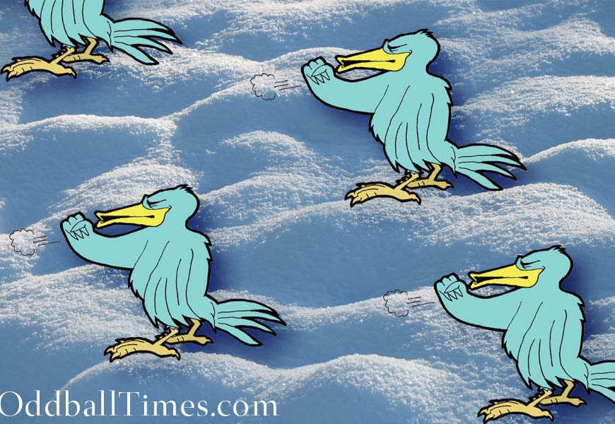 A cartoon of four coughing birds on snow